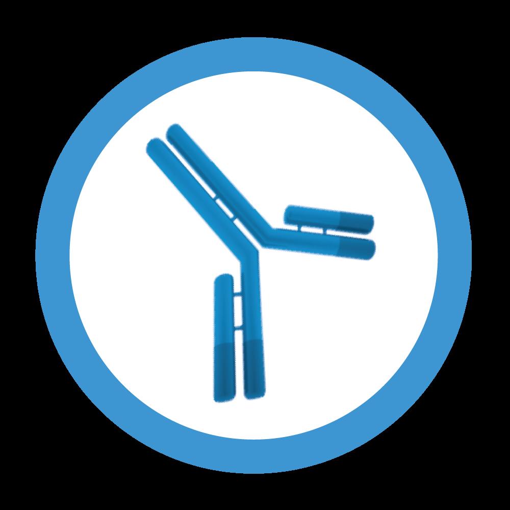 COV2 | NL | AICONE BIOCHIP – kwantitatieve serologie COVID-19 test